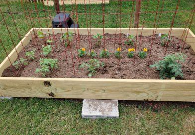 Raised Garden – First Time